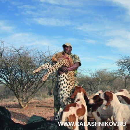 леопард, сафари, намибия