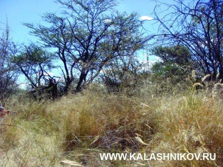 сафари, намибия